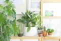 Pianta da appartamento: 4 idee anche per chi non ha il pollice verde