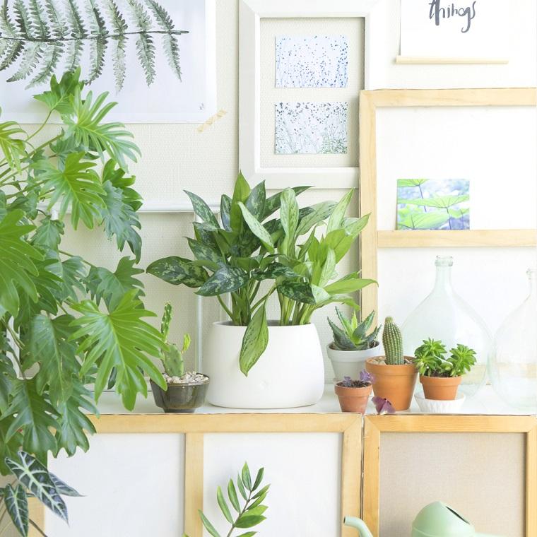 pianta da appartamento suggerimento aglaonema