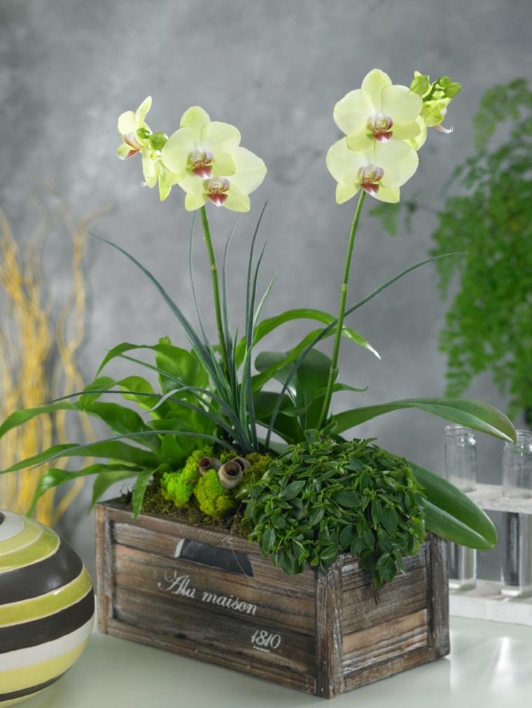 piante da interno idea orchidea vaso legno