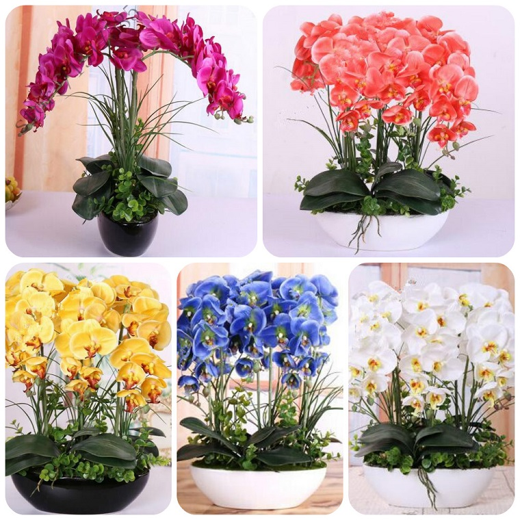 piante da interno tante composizioni orchidea