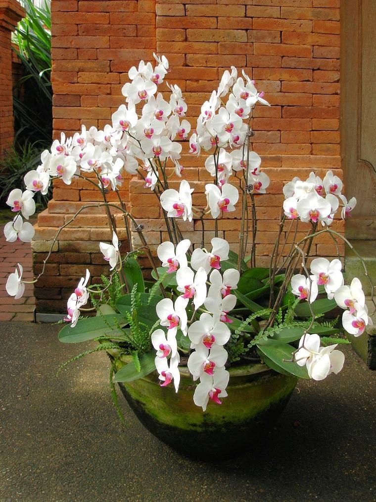 vaso orchidea colore bianco