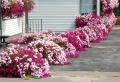 Aiuole per giardino: tante composizioni piene di colori brillanti