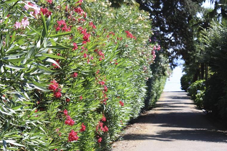 Siepi Da Giardino Crescita Veloce : Giardini mgf le piante da siepe col miglior rapporto altezza prezzo