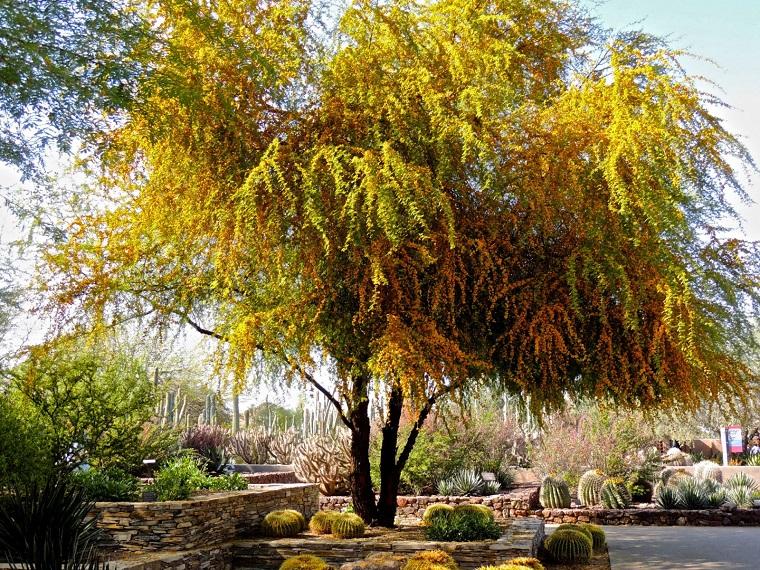 Alberi Da Giardino A Crescita Rapida Acacia Alberi Crescita Veloce: Una  Selezione Delle Specie Più Decorative ...
