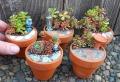 Giardini in miniatura: ecco un modo particolare per trascorre il tempo libero