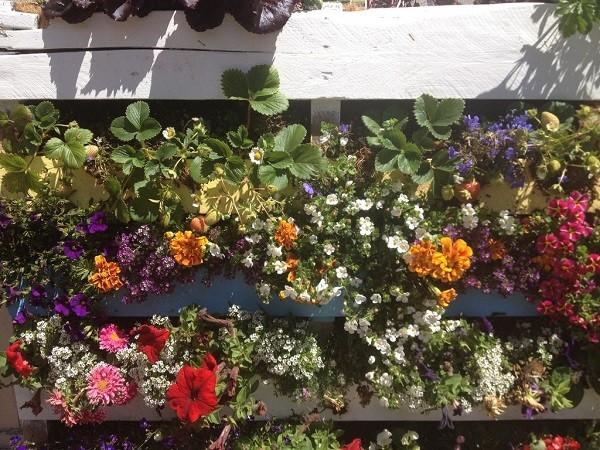 idea-fresca-colorata-vivace-giardino-verticale