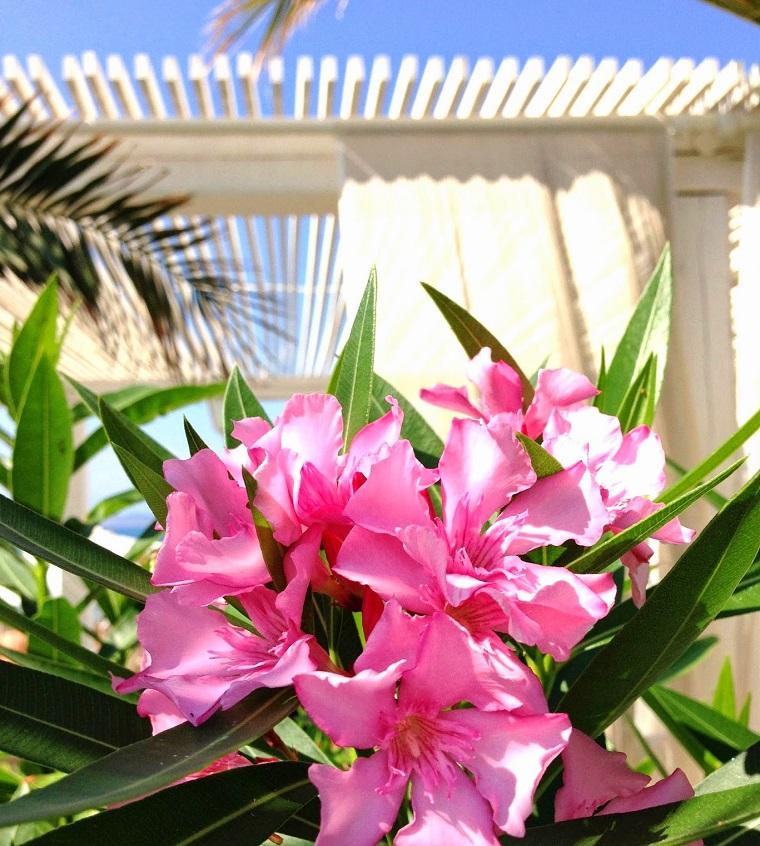 oleandri-colore-rosa-idea-giardino