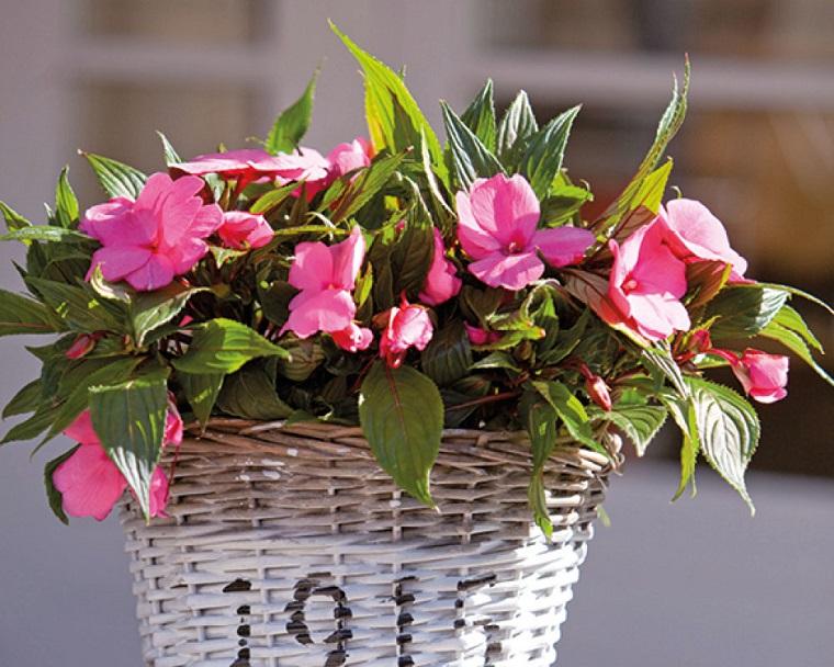 oleandro vaso-vimini-giardino-rosa