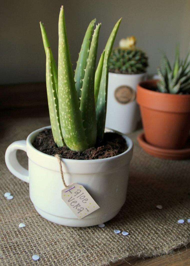 piante-da-balcone-aloe-vera