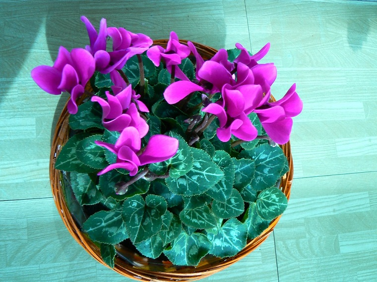 piante-da-balcone-petali-viola