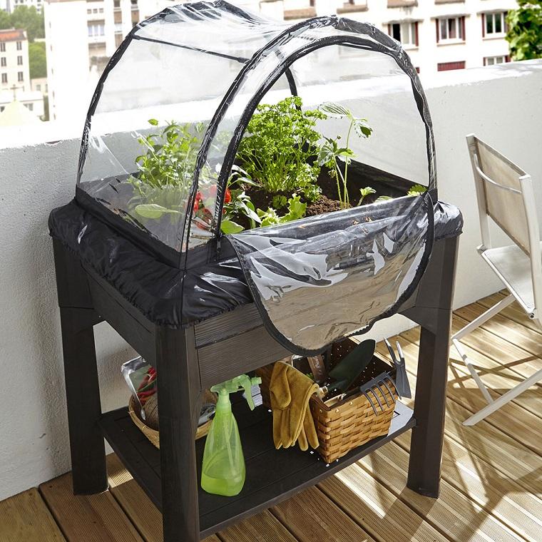 piante-da-balcone-sera-colore-nero