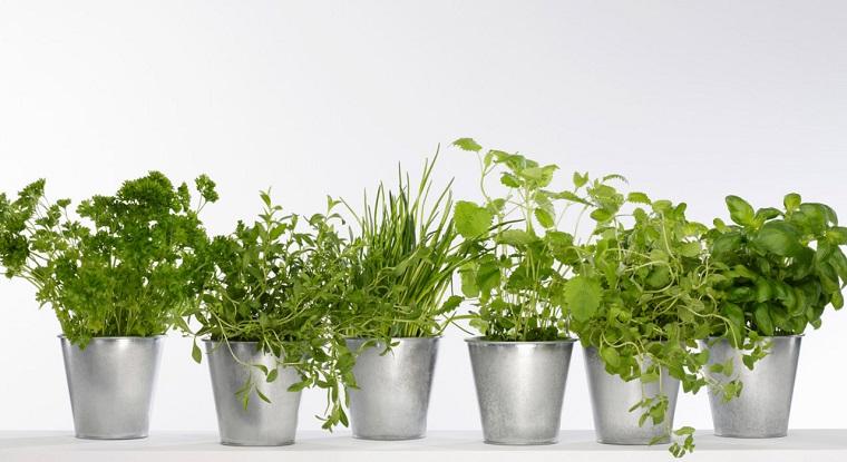 piante per balconi-aromatiche-verde