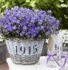 piante-per-balconi-idea-originale-primavera