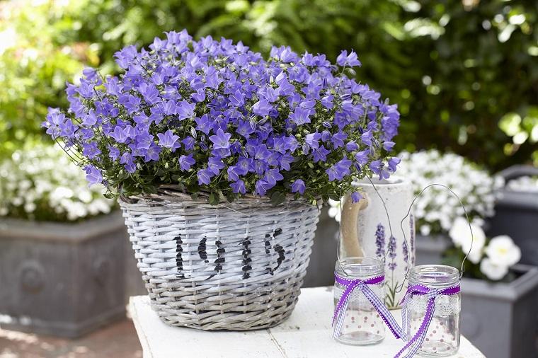 piante per balconi-idea-originale-primavera