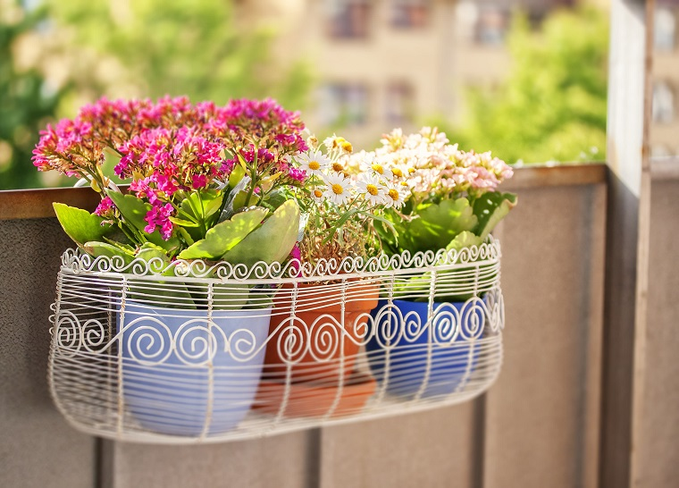 piante per balconi-vasi-colorati