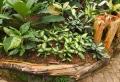 Bordure per aiuole in pietra e legno: ecco le soluzioni più originali