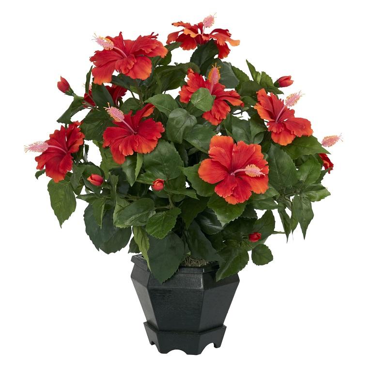 fiori-da-appartamento-ibisco-rosso