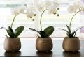 Fiori da interno: ecco alcune varietà perfette per l'appartamento