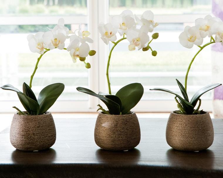 fiori-da-appartamento-orchidee-bianche