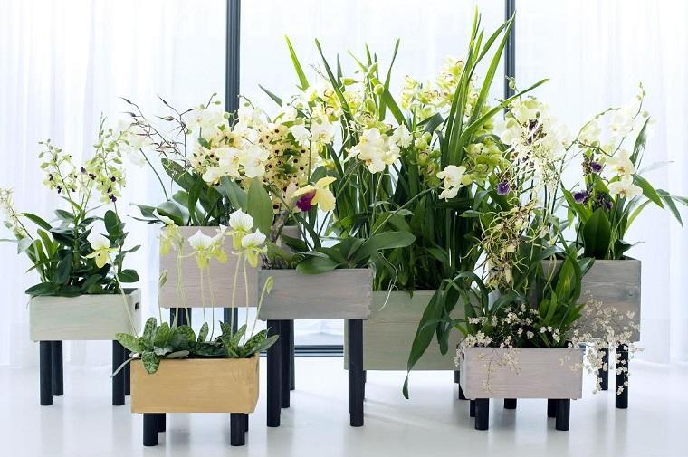 fiori da interno-orchiedee-bianche