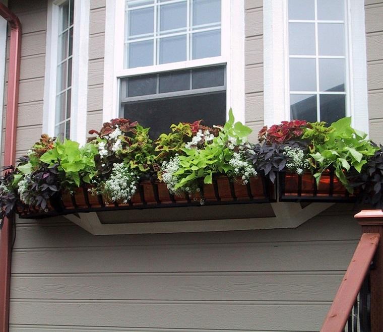 balconi-fioriti-idea-piante-sempreverdi