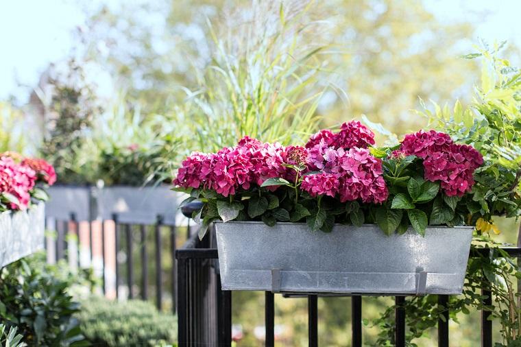 fiori-da-balcone-ciclamini-rosa