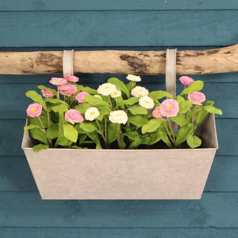 fiori-da-balcone-margherite