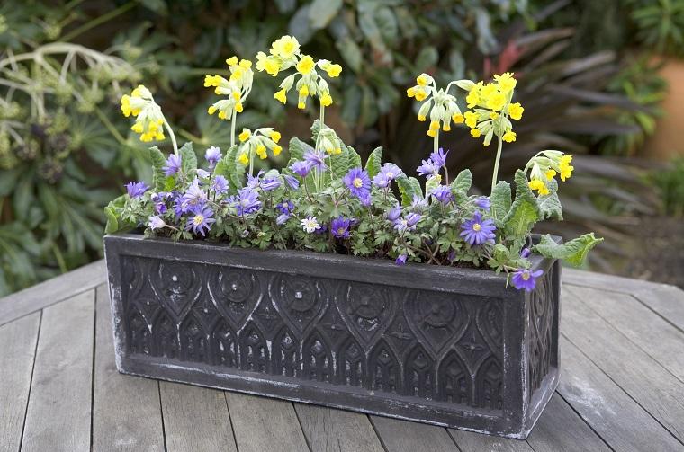 fiori-da-balcone-primule-margherite-viola