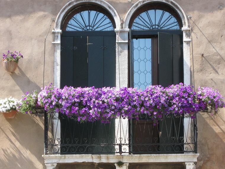 fiori-da-balcone-tonalita-viola