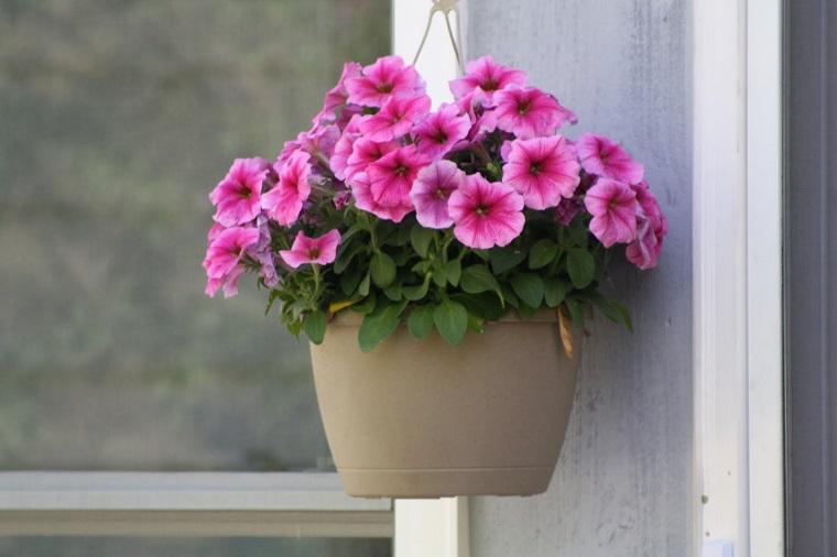 fiori-da-balcone-vaso-petunie-appendere