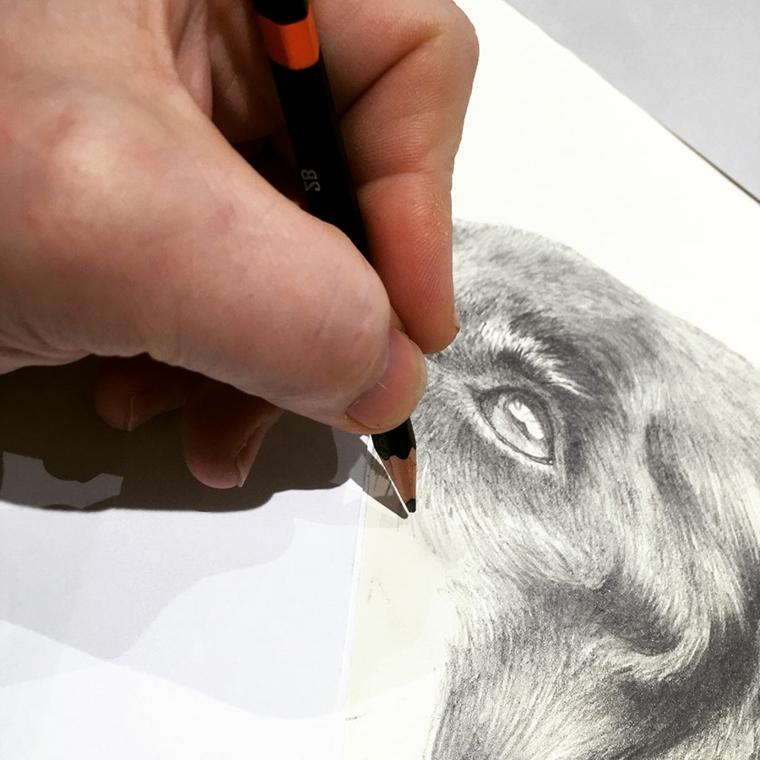 disegni-a-matita-fase-finale-realizzazione-primo-piano-animale-occhio-molto-realistico