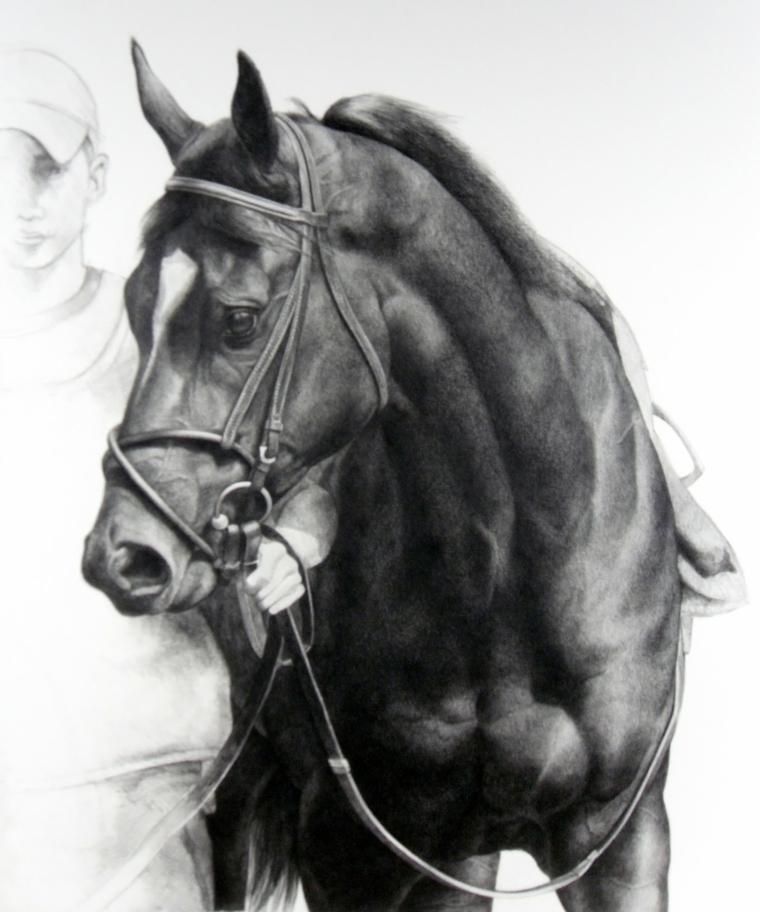90 disegni a matita fra i pi belli e sorprendenti con On cavallo disegno a matita