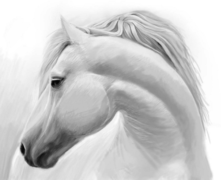 molto disegni di cavalli a matita je64 pineglen