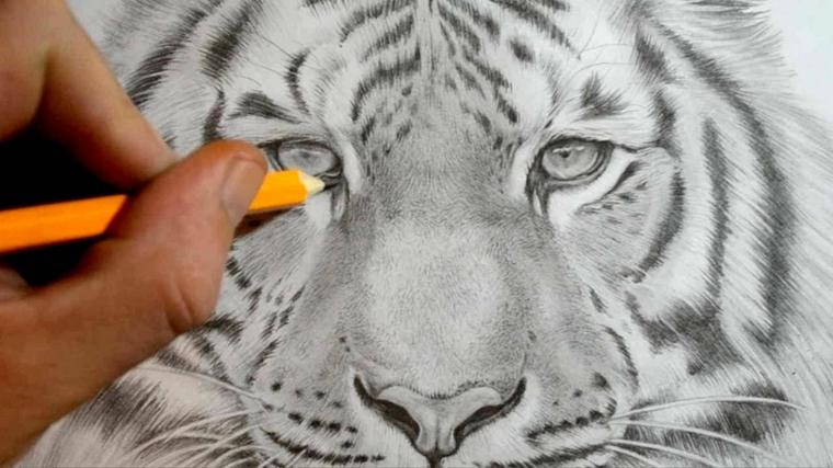 disegni-a-matita-ultimi-ritocchi-parte-interna-occhio-leone-molto-definito-ogni-singolo-dettaglio