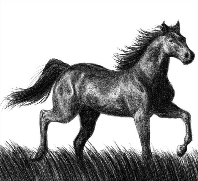 Amazing disegni di cavalli facili ek61 pineglen for Disegni di cavalli a matita