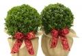 Idee regalo Natale: tantissime proposte tutte…con i fiocchi!