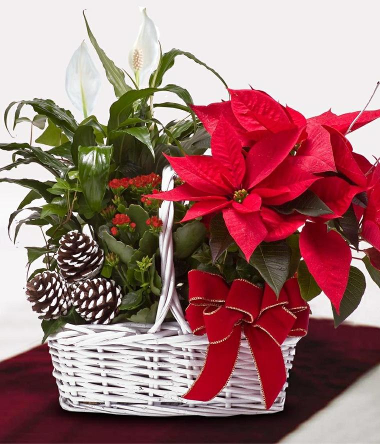 idee-regalo-natale-cesto-vimini-bianco-interno-stella-natale-rossa-pigne-piante-verdi