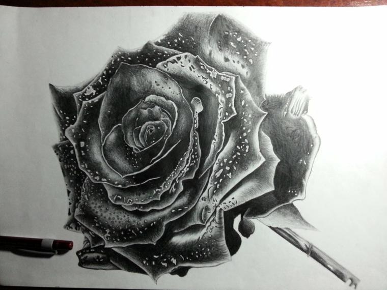 immagini-da-disegnare-facili-focus-rosa-tanti-petali-compatti-gocce-rugiada-piccolo-gampo