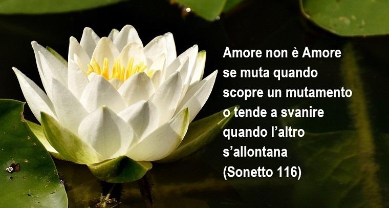 Frasi d'amore e una tratta da Sonetto 116, Ninfea di colore bianco d'acqua