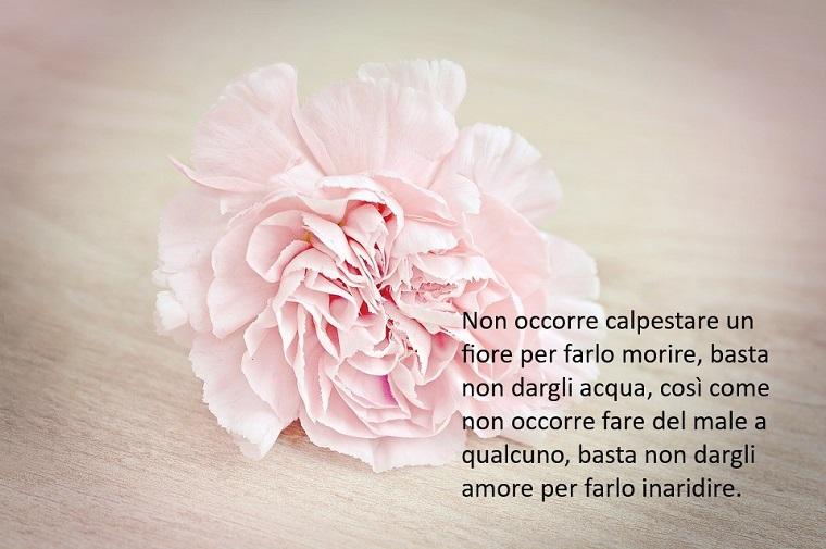 Frasi bellissime, una scritta di colore nero su uno sfondo rosa e fiore con tanti petali