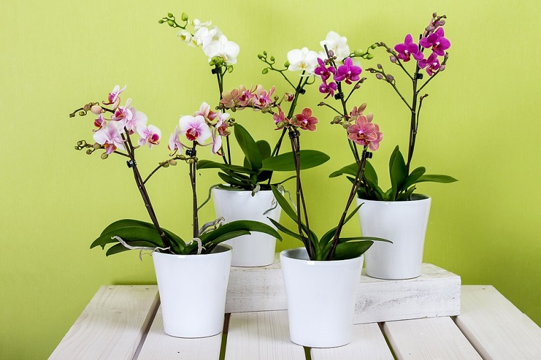 Piante da interno e delle bellissime orchidee colorate in dei vasi di colore bianco