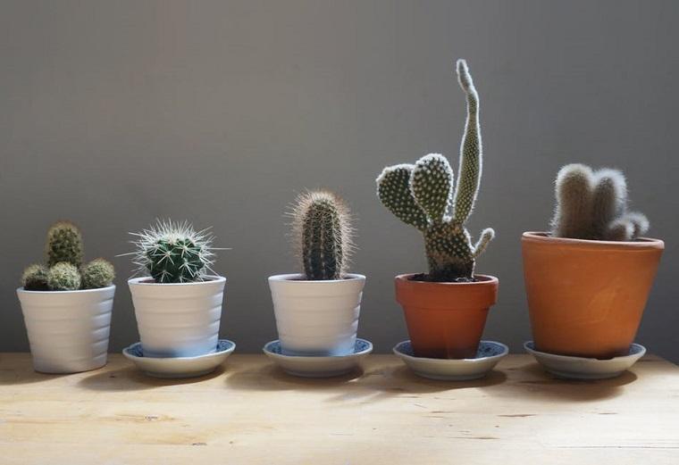 Piante da appartamento, idea per la coltivazione di piante grasse come cactus di varietà