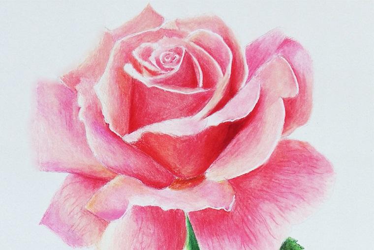 Immagini da disegnare facili, una rosa colorata con i pastelli