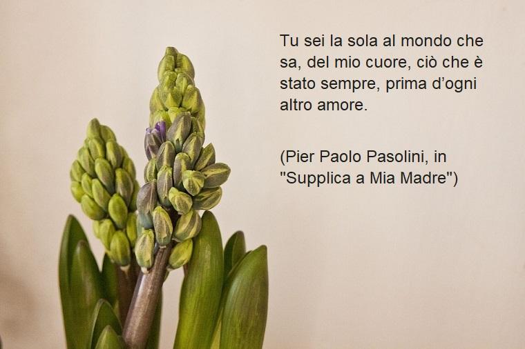 Frase di Pier Paolo Pasolini, frasi sulla mamma da dedicare alla sua festa