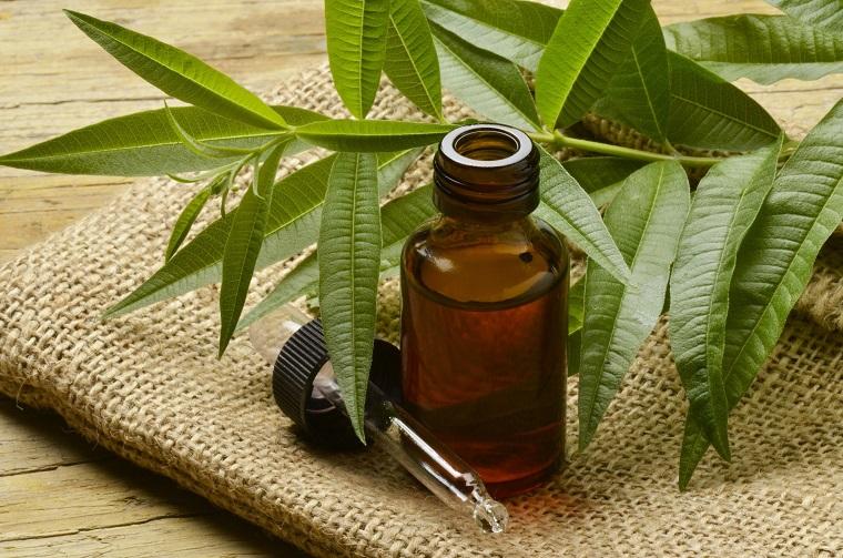 Foglie lunghe e verdi di Tree Tea, oli essenziali, bottiglietta di vetro colore scuro pipetta