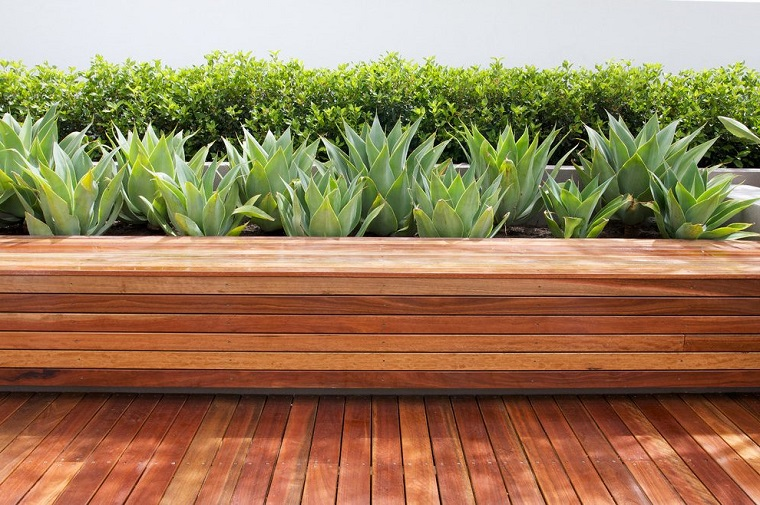 Piccoli giardini con piante grasse, panchina di legno e una siepe dietro