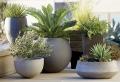 Piccoli giardini: piante, alberi e arredamento da esterno per un'oasi in casa