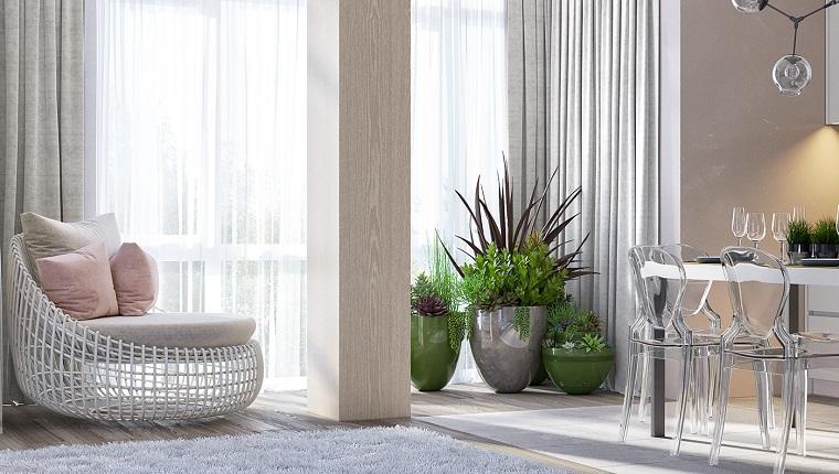 Piante grasse da appartamento in vasi e sala da pranzo con sedie trasparenti di plastica