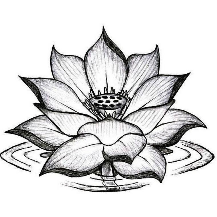 Disegno a matita di un fiore di loto, mandala tattoo uomo con sfumature