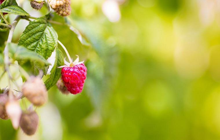 Alimenti che non contengono carboidrati e una proposta con i lamponi